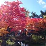 境内の紅葉が見頃です。